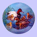 Nature's Nursery Ducks - J oeThornbrugh