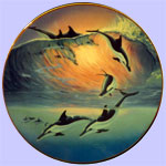 Sunrise  Reverie - Dolphin Discovery
