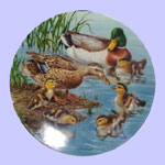 Nature's Nursery Ducks - Joe Thornbrugh