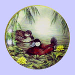 Ducks for all Seasons - Robin N Rodgers