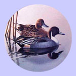 Federal Duck Stamps - Phil Scholer