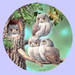 Baby Owls of North America - Joe Thornbrugh - Peek A Whoo:  Screech Owls