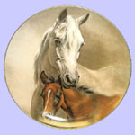 The Horses of Fred Stone - Arabian Mare and Foal