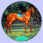 Race Horse - Champion Thoroughbreds - Susie Morton