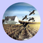 Lynn Kaatz - Classic waterfowl: Ducks -  Canada Geese In The Autumn Field