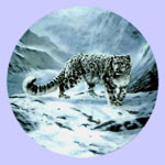 Fleeting Encounter-The Worlds Most Magnificent Cats - Charles Frace - Snow Leopard