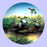 Lynn Kaatz - Classic waterfowl: Ducks - Green-Wings At The Morning Marsh