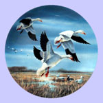 Lynn Kaatz - Classic waterfowl: Ducks - Against November Skies - Snow Geese