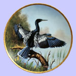 Jim Faulkner - The Anhinga