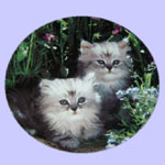 Cuddly Kittens - Nancy Matthews