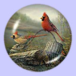 Autumn In The Air - Cardinals - Sam Timm