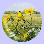 Summer Gold Goldfinch - Marc Hanson