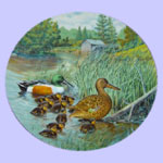 Living With Nature:  Jerner's Ducks - Bart Jerner