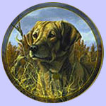 Portrait Hound Series - Hoosier - Trevor Swanson - Yellow Labrador Retriever