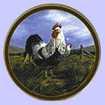Silver Penciled Rock Plate - Trevor Swanson - Rooster Plate - Kings of The Roost - Islandia