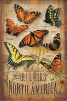Rosemary Millette Butterflies of North America